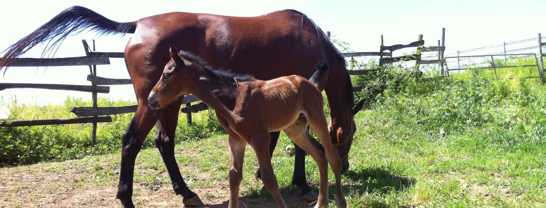 I cavalli - Cascina del Poggio - Agriturismo nel bosco
